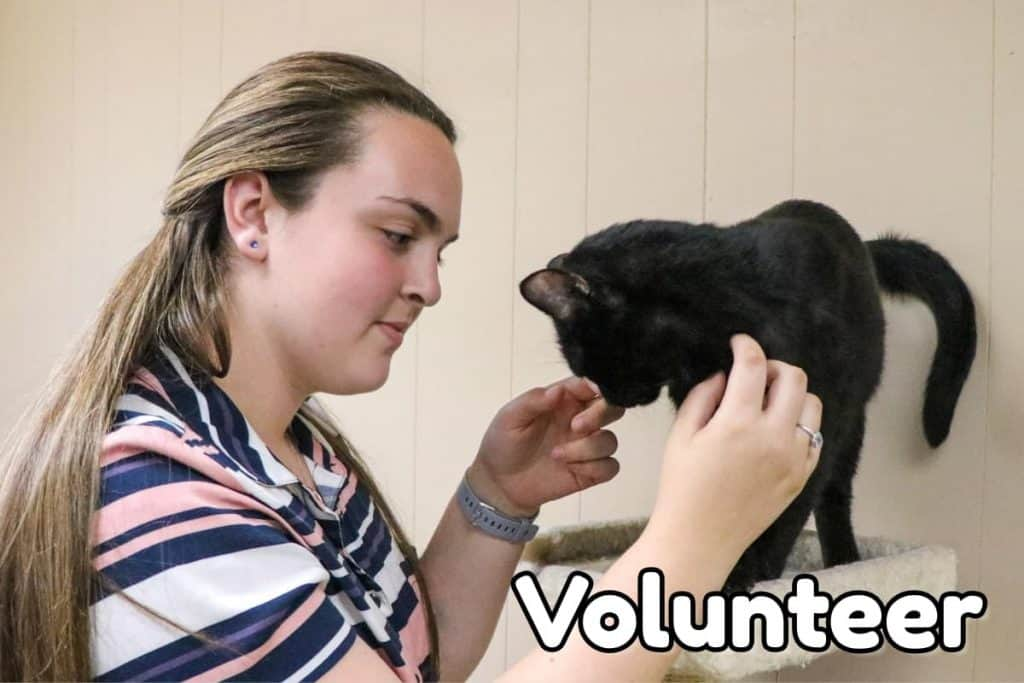 Humane Society of Valdosta – Promoting responsible pet